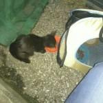 野良猫 黒