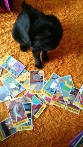 猫タロット